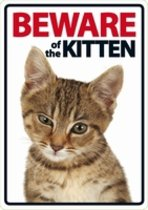 Beware of the Kitten